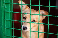 Dog in a animal shelter.