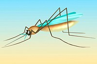 MOSQUITO, DRAWING