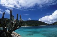 British Virgin Islands (British colony) - Peter Island - Cactus (Cactaceae) in the sea