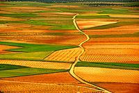 Spain field