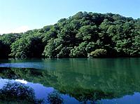 Trees reflected on water surface, Cape Sugo, Aomori prefecture, Japan