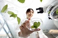 Woman holding petri dish with leaves in laboratory