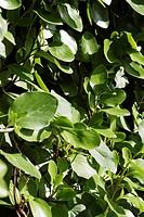 Close_up of leaves, Dublin, Republic of Ireland