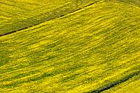Aerial view of lentil fields of Piano Grande, Umbria with abstract effects of yellow and green of fields