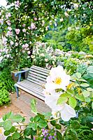 Rose greenhouse