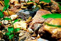 Contemplative toad