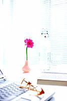 Vase of pink gerbera daisy on desk