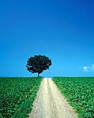 Field and tree, Hokkaido Prefecture, Japan