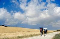 Saint Jacques Way, Road to Santiago pilgrims near Belorado, Burgos province, Castille-Leon, Spain