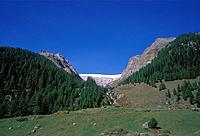 Switzerland, Europe, Valais, Lötschental, wood, forest, tree, pasture, willow, alp, Alp, autumn, nature, mountain, mountains,