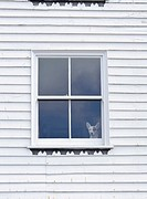 Small dog looking out of window in white painted woodframe house, Hastings, East Sussex, England, UK