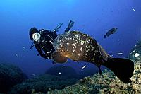 Scuba Diver and Dusky Grouper, Ephinepelus marginatus, Sardinia, Italy