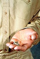 Man holding a tree frog in his hand