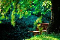 Bench near a tree