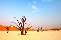 Dead trees in front of red sand dune, Deadvlei, Sossusvlei, Namib Naukluft National Park, Namib desert, Namib, Namibia