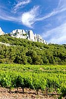 vineyards near Gigondas at Col Du Cayron, Provence, France