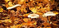 Autumn in ´s Gravenland