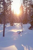 Sun shining through snow covered trees