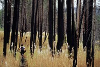 A young woman biking in fall in a burnt forest in Kelowna, British Columbia, Canada.