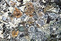 weathered stone background