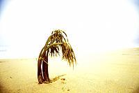 Dead palm on the beach