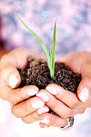 Closeup of females hands holding small plant in hands