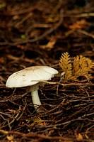 Single mushroom on forest floor