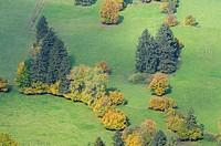 Trees and meadows in autumn, aerial view  Fuessen, Allgau, Allgaeu, Schwaben, Bavaria, Germany