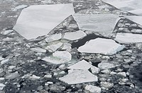 Ice Floe  Weddell Sea, Antarctic Peninsula, Antarctica