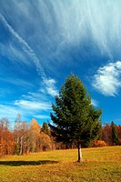 autumn landscape with fir tree