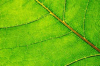 structure and texture of green leaf