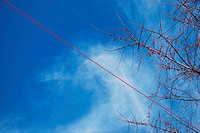 Berries and wire on sky