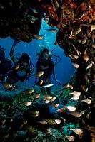 Scuba Divers in Copper Sweeper School