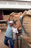 Man Lifting Bag of Cacao Beans