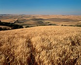 Wheat fields, seen from Steptoe Butte State Park in eastern Washington, ready for harvest.