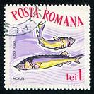 poststamp fish Beluga