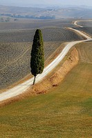 view of the typical landscape of Tuscany in Val d´Orcia