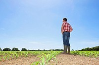 Farmer with hands on hips in field of corn seedlings