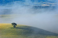 Val d´Orcia at dawn, morning fog, Tuscany landscape, UNESCO world heritage site, San Quirico d´Orcia, Siena province, Tuscany, Italy
