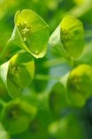 Foliage plant outdoors