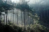 Sun rays through trees, Vidreres, Catalonia, Spain, Europe