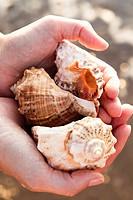 Close up of woman holding seashells
