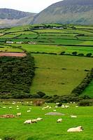 Ireland, County Kerry, Dingle peninsula, landscape of Annascaul