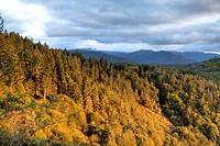 Autumn in the woods  Artikutza  Navarra  Spain