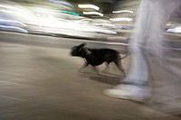 walking the dog at night, Valencia, Spain