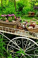 Flower cart in garden