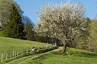 Germany, Bavaria, Chiemgau, Woman mountain biking