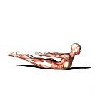 yoga practice locust