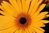 Flowery Rays of Autumn