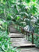 tropical plants in Fiji Islands